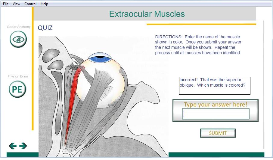 Quiz_Quetions_Eye_Muscle_Feedback